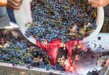 Домашнее вино. Процесс изготовления