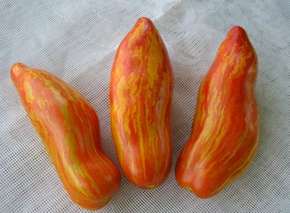 Рейтинг стійких сортів томатів