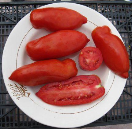 Обзор и фото лучших сортов помидор