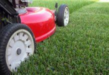 Красивый газон – это непросто. Как ухаживать за газоном весной?