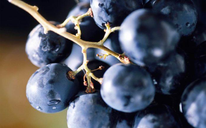 Плюсы и минусы любительской селекции винограда