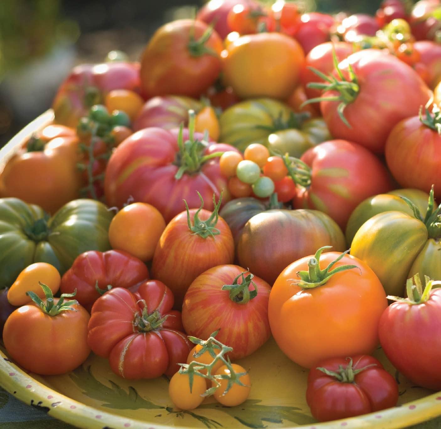 Помидоры: выбор сорта, подготовка и посев семян, уход за рассадой
