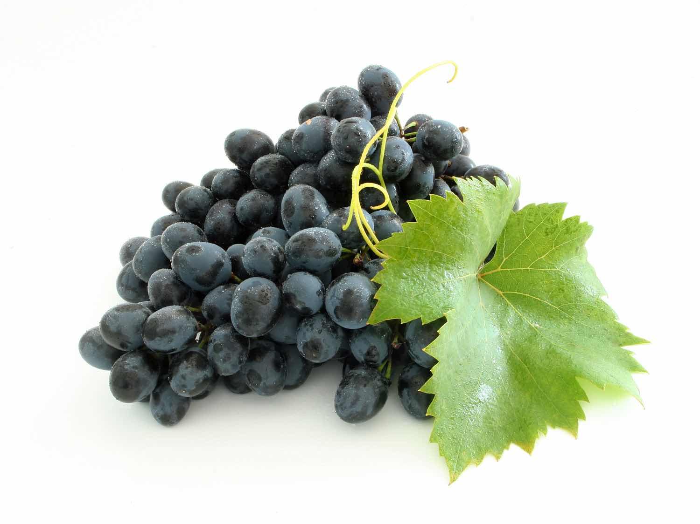 Выращиваем зеленые саженцы винограда