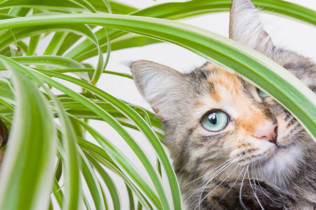 Растения, опасные для домашних животных
