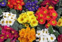 Лучшие цветы на вашу клумбу