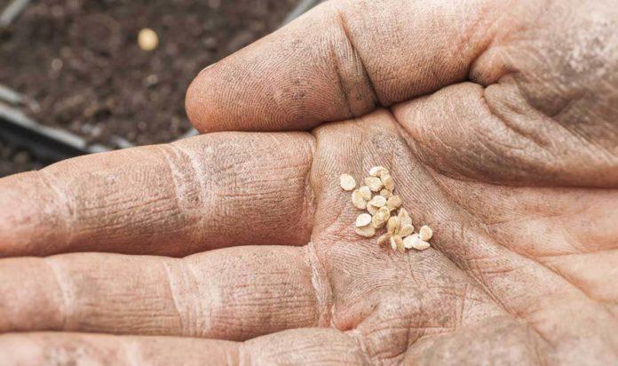 Выбираем семена: советы специалиста
