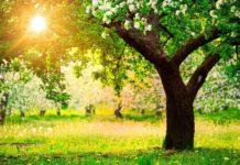 Які овочеві культури можна посадити в тіні?
