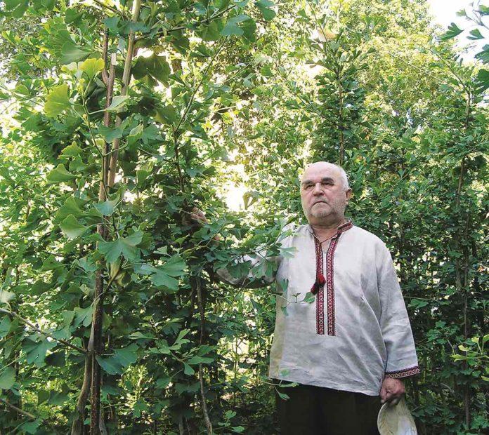 Гінкго білоба - святе дерево сходу