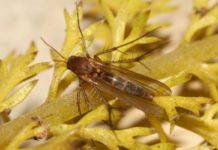 Шкідливі личинки в розсаді овочей