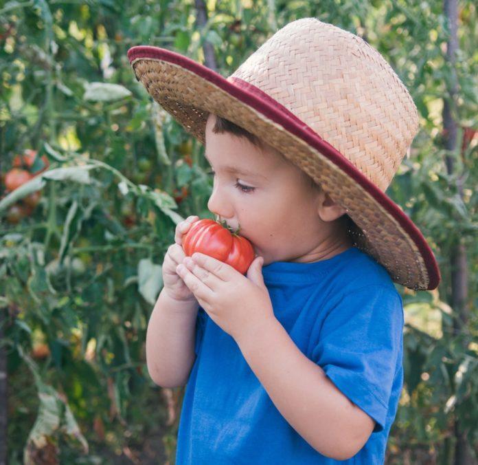 Мальчик кусает помидор