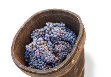 Виноград в дубовой бочке