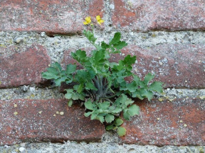 wall_fouling_plant