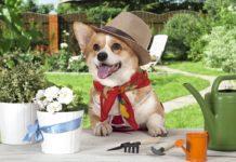 Основные работы в саду и на огороде в середине июля