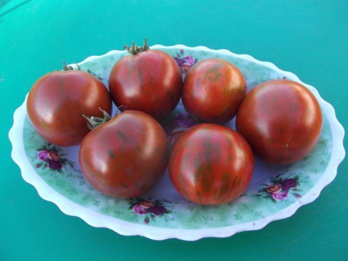 Гномы на помидорной грядке