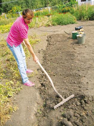 Сгрести комки почвы, переместив их в образовавшиеся при выкопке бороздки, и собрать при этом оставшиеся не убранными клубни. Окончательно выровнять бороздку