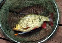 Календарь рыболова. Июль