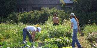 Сентябрь. Сбор урожая