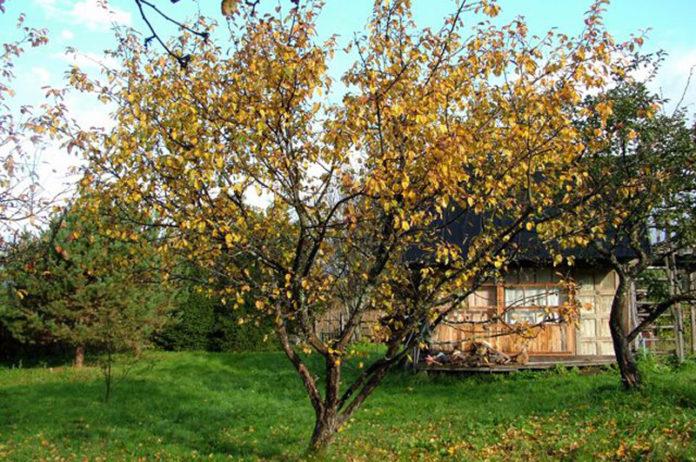 Осенняя профилактика против вредителей и болезней сада