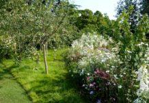 Как определить пригодность участка под сад