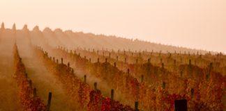 Виноградник в ноябре