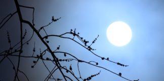 Лунный календарь май