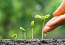 Агрогомеопатия и гумиреактор
