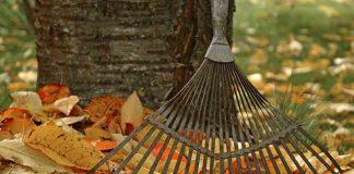 Октябрь. Советы для садоводов и огородников
