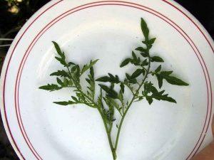 Лист - главный орган растения