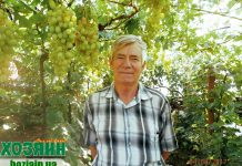Николай Удовенко на своем винограднике
