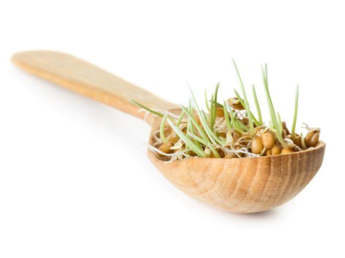 Пророщенные семена заменят рассаду!