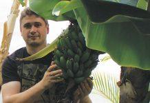 Денис Терентье и урожай бананов