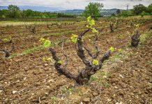 Почва для виноградника
