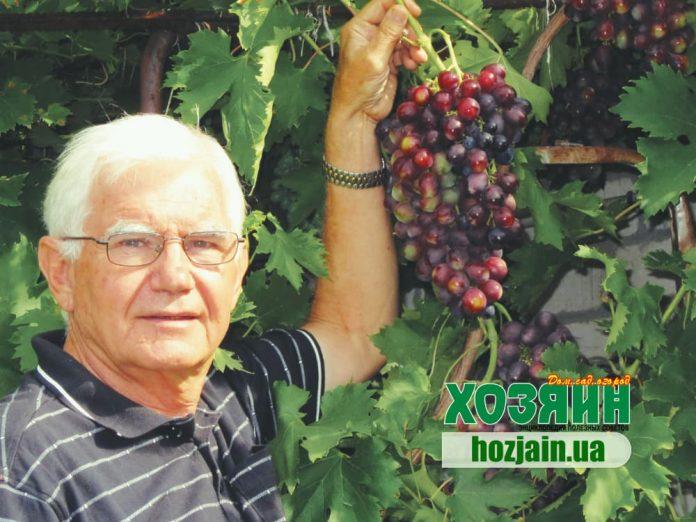 Ю. В. Попович, виноградарь-любитель, г. Николаев
