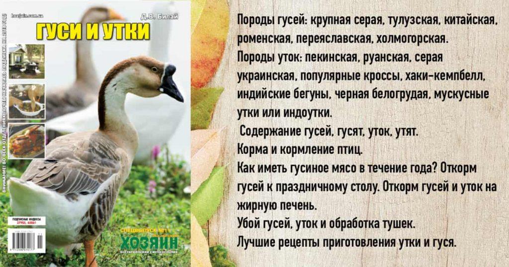 Наш спецвыпуск про гусей и уток