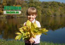 Як розпорядитися опалим листям
