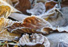 Опавшая листва, заморозки