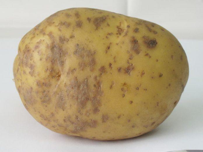Зразок картоплі читачки