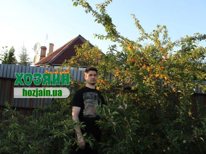 Денис Терентьев с урожаем алычи, выращенной без применения химикатов.