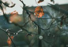 Осенняя посадка сада: особенности и преимущества