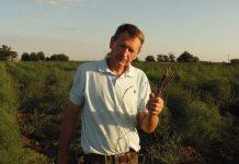 Олег Демченко на плантации спаржи