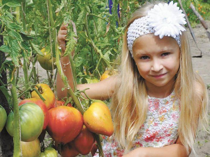 Дочка автора и сорт томатов Розовый мед