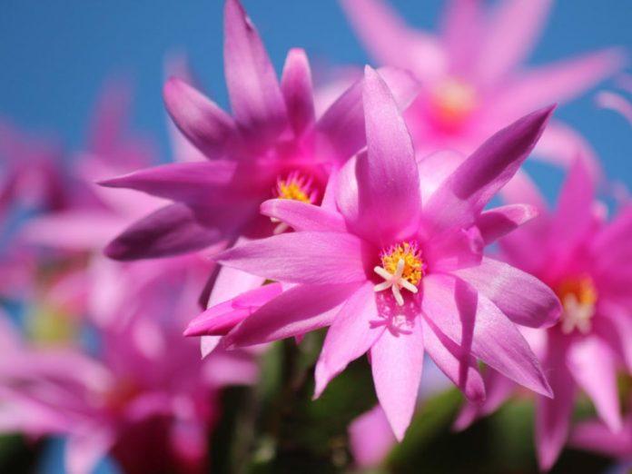 Рекомендации по уходу за комнатными растениями зимой