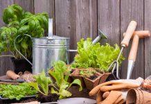 Готовимся к новому сезону: советы огородника-садовода