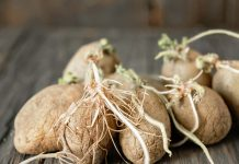 Прорастание картофеля