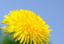 Польза сорняков для вашего огорода