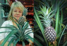 Как вырастить ананас на подоконнике