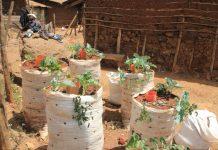 Выращивание овощей в мешках и ведрах