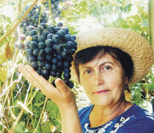 Жена Татьяна с гроздью винограда Блубел весом 550 г.