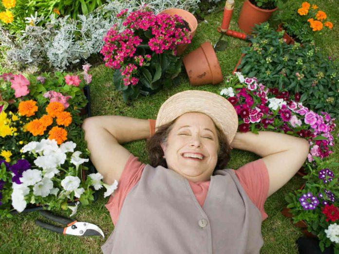 Рослини для ледачих: багаторічні овочі, цибуля-багаторічник, дворічні овочі, багаторічні квіти
