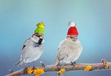 Подкормим птиц